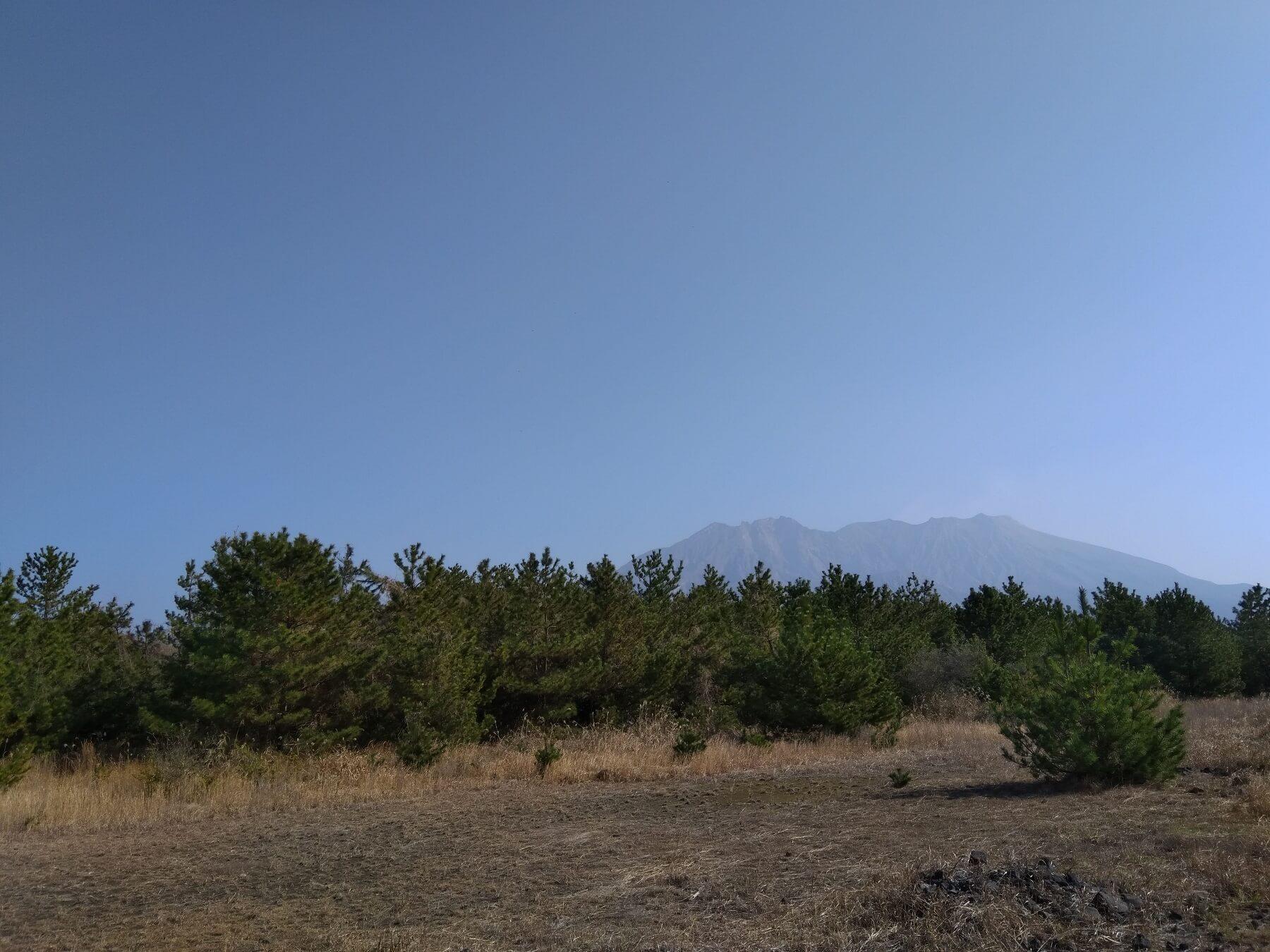 I diversi tipi di vegetazione di Sakurajima