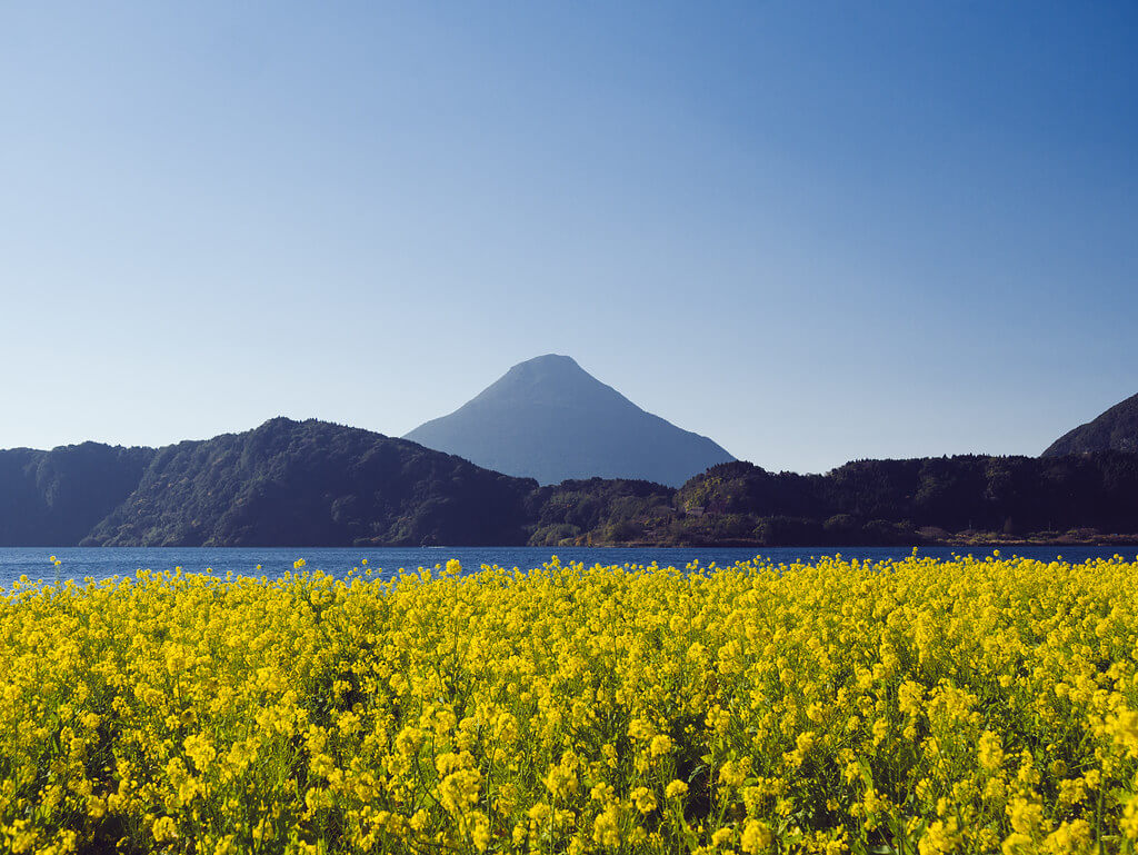 Il monte Kaimon e il lago Ikeda decorati dalle fioriture della colza