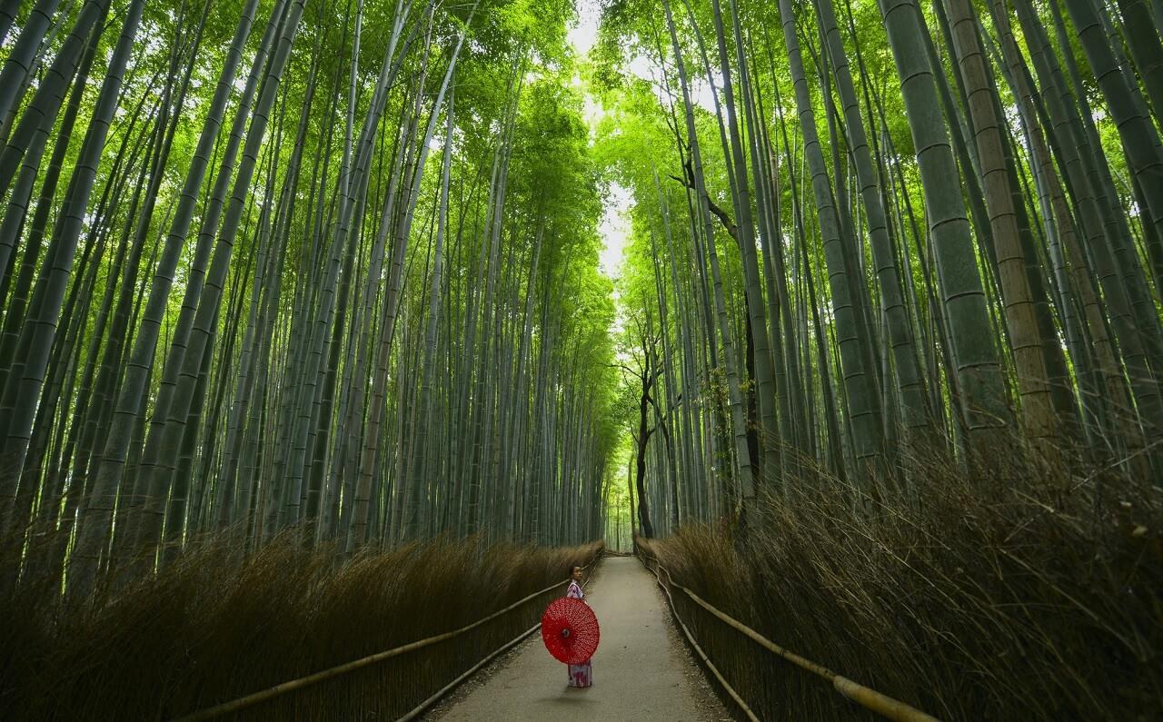 La foresta di bambù di Arashiyama e Sagano