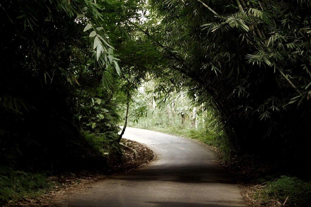 La foresta di bambù nei pressi del villaggio di Penglipuran