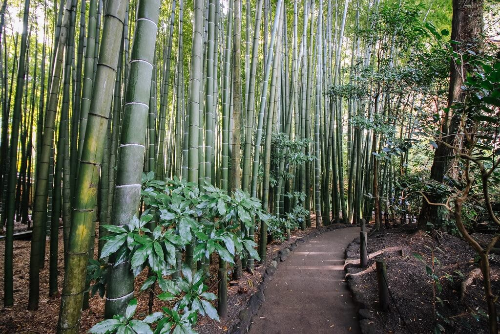 Il boschetto di bambù di Hokokuji, Kamakura