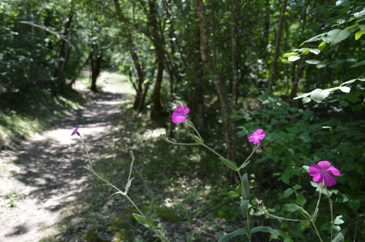 Vitozza: un bosco curato e rigoglioso, in cui si possono fare piacevoli incontri
