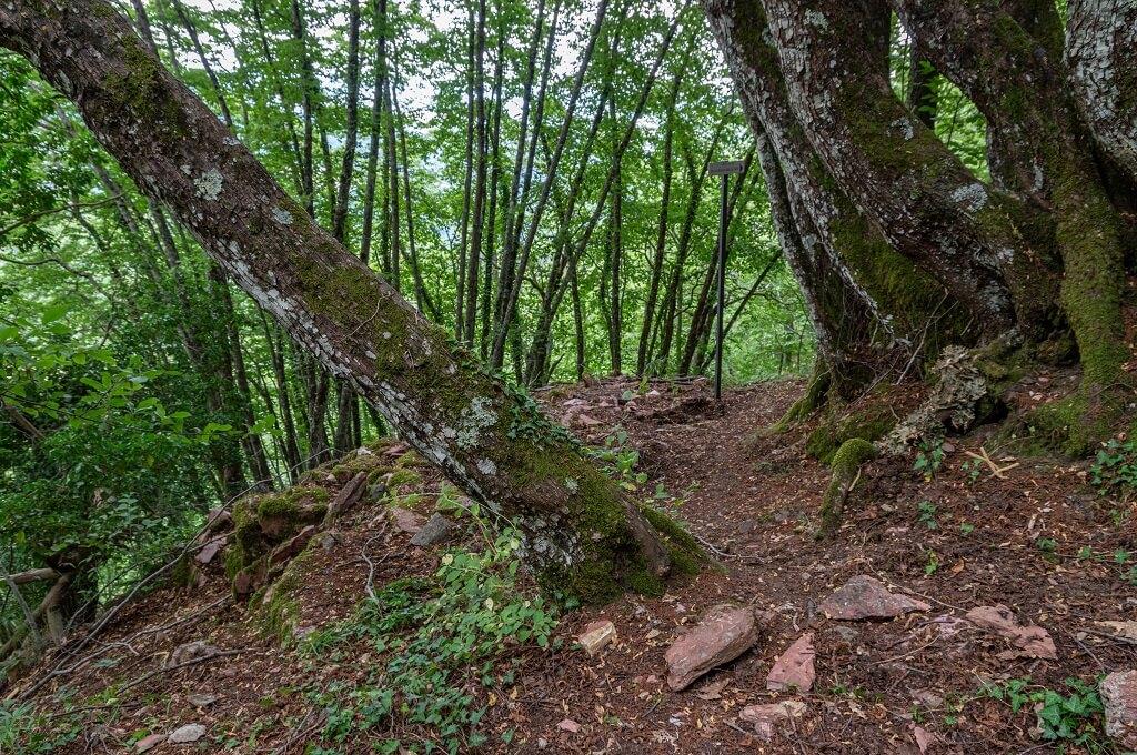 """Frammenti di """"marmo rosso"""" di Montieri lungo il sentiero tra la cava e buca delle fate"""