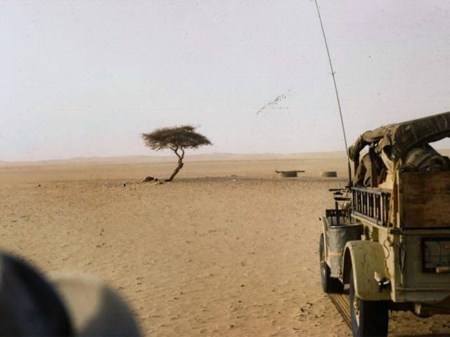 L'albero del Ténéré nel 1961