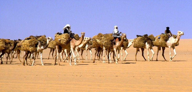 Carovana del sale in viaggio da Agadez a Bilma in Niger