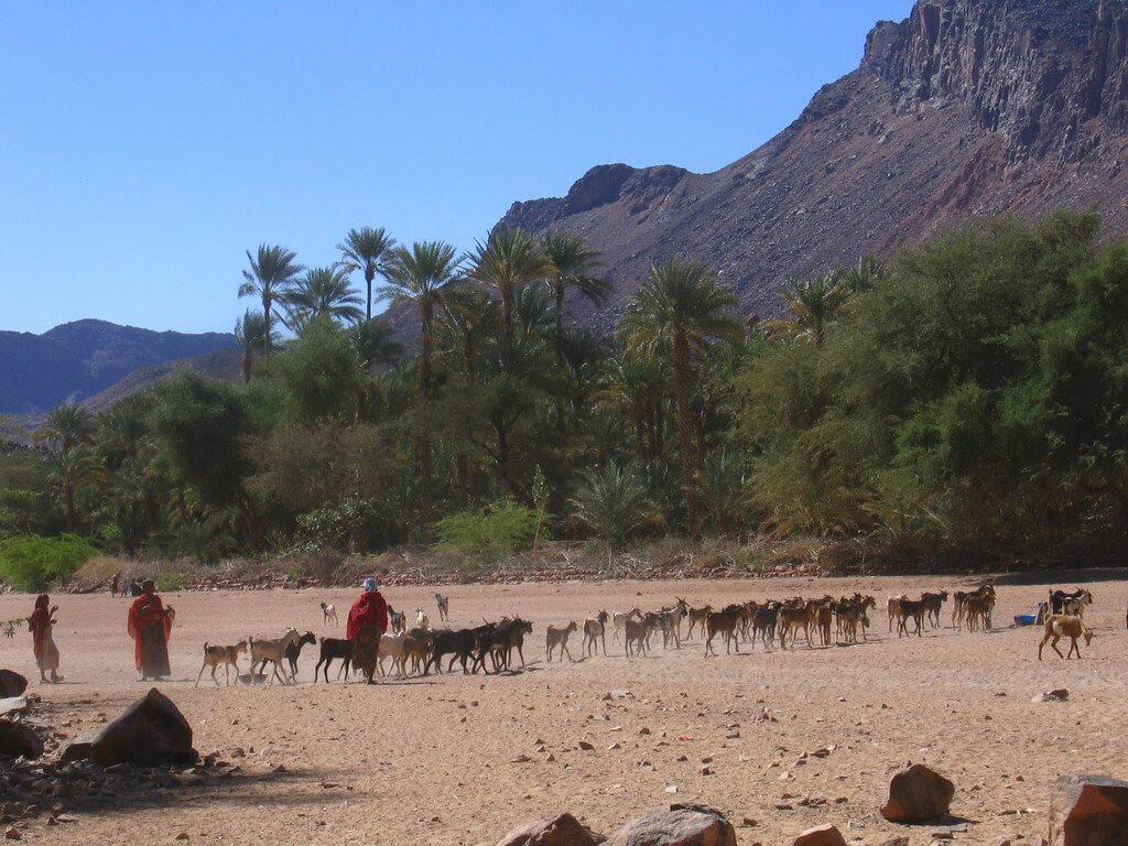 L'oasi di Timia, a poco più di 150 chilometri dall'albero del Teneré
