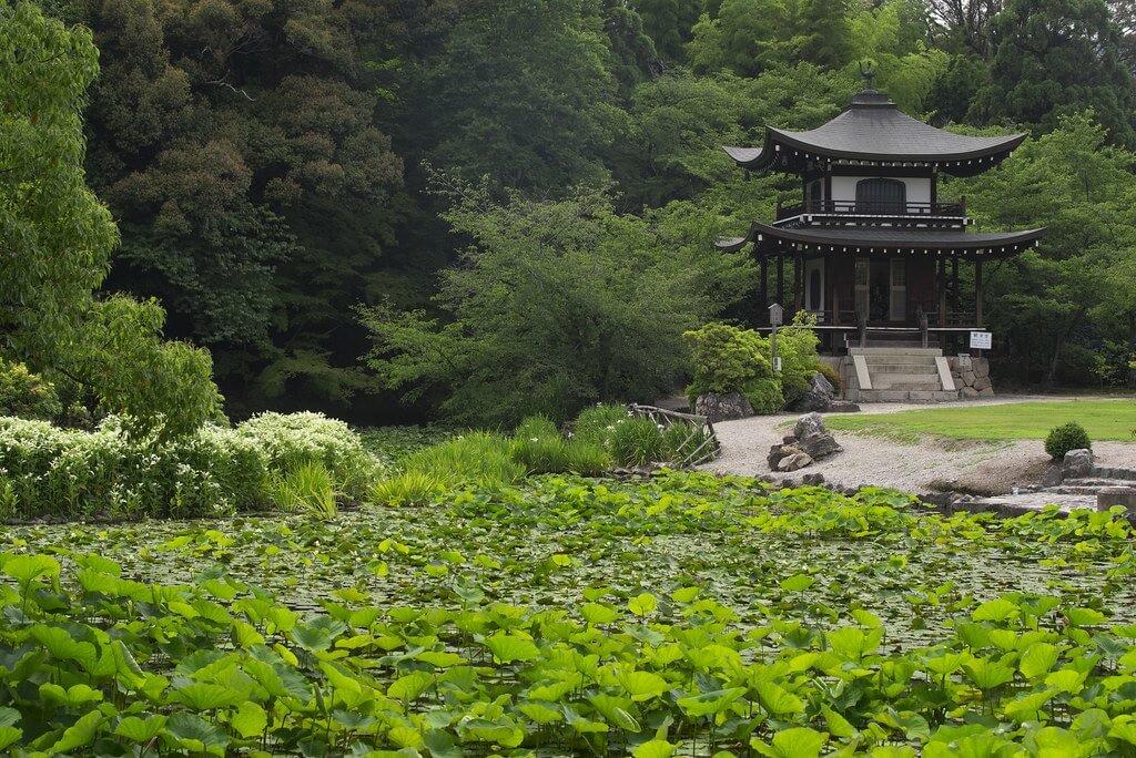 Tsuyu (giugno - metà luglio), la stagione giapponese delle piogge e dei colori vivaci
