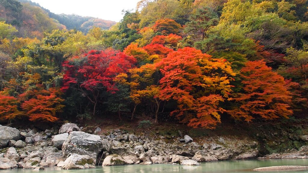 I colori intensi dell'autunno giapponese