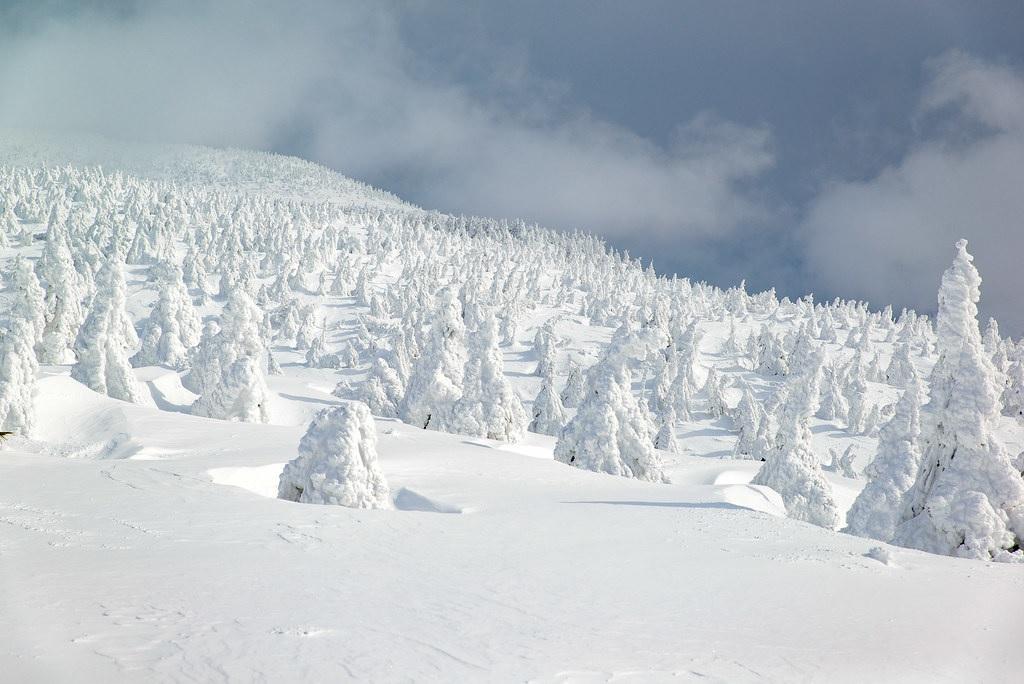 """I """"mostri"""" di neve dei monti Zaō"""
