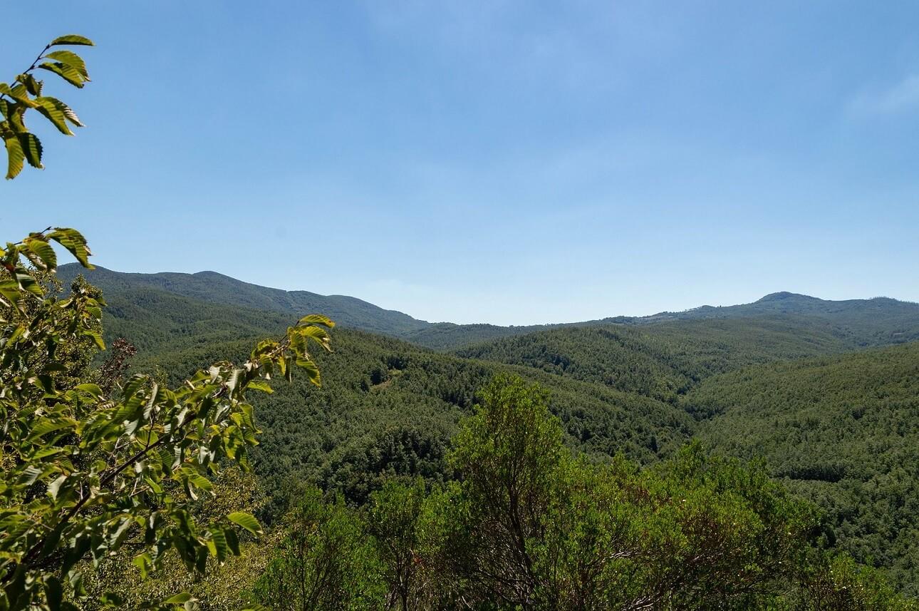 Monte Alto e Sassoforte visti dalla Riserva naturale la Pietra. Si intravedono le vallate scavate dai fossi affluenti del Farma