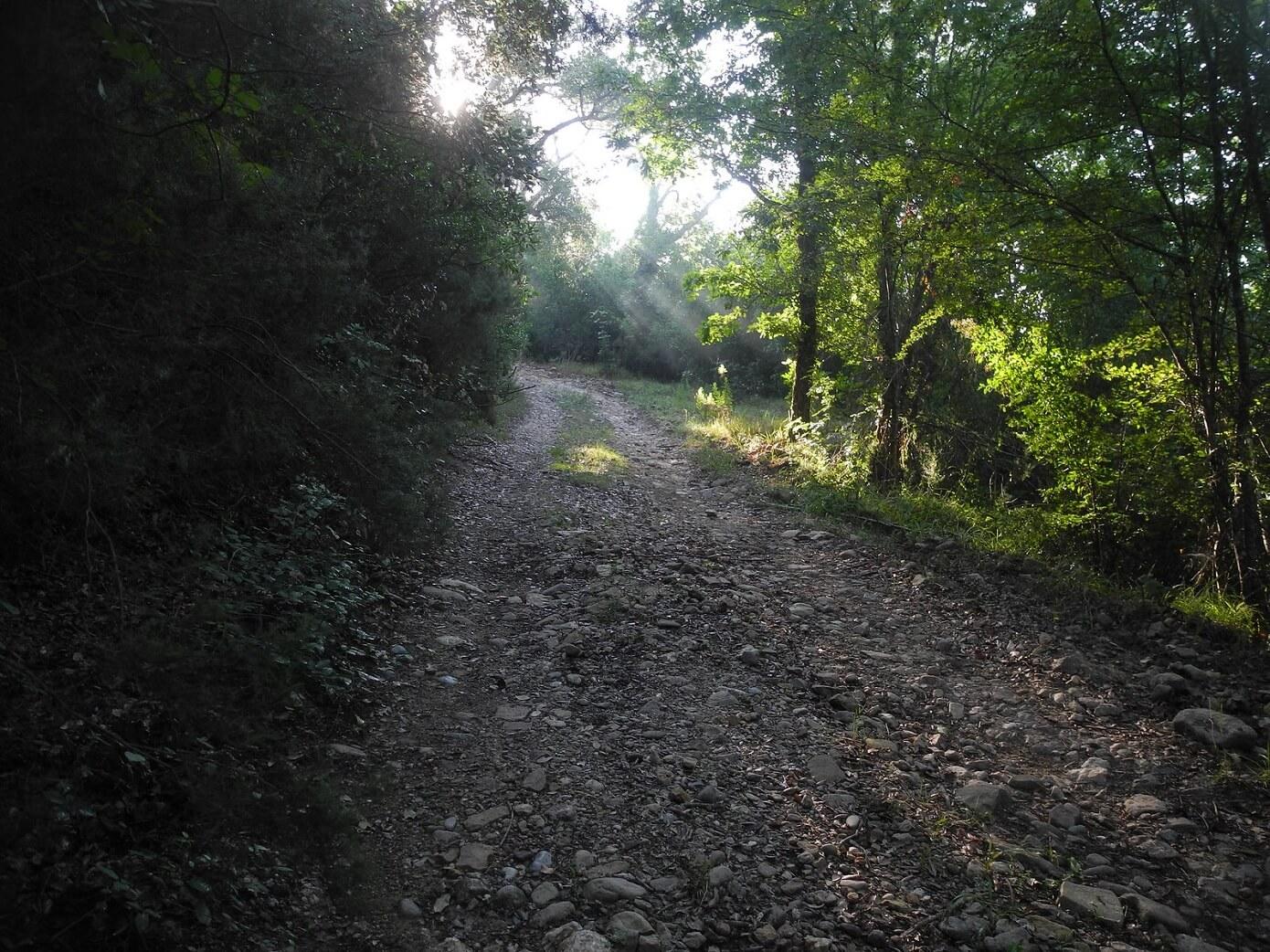 Sentiero lungo il corso del torrente Farma