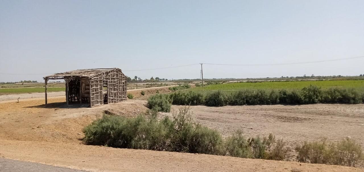 La campagna nel periodo secco. Sindh, Pakistan.