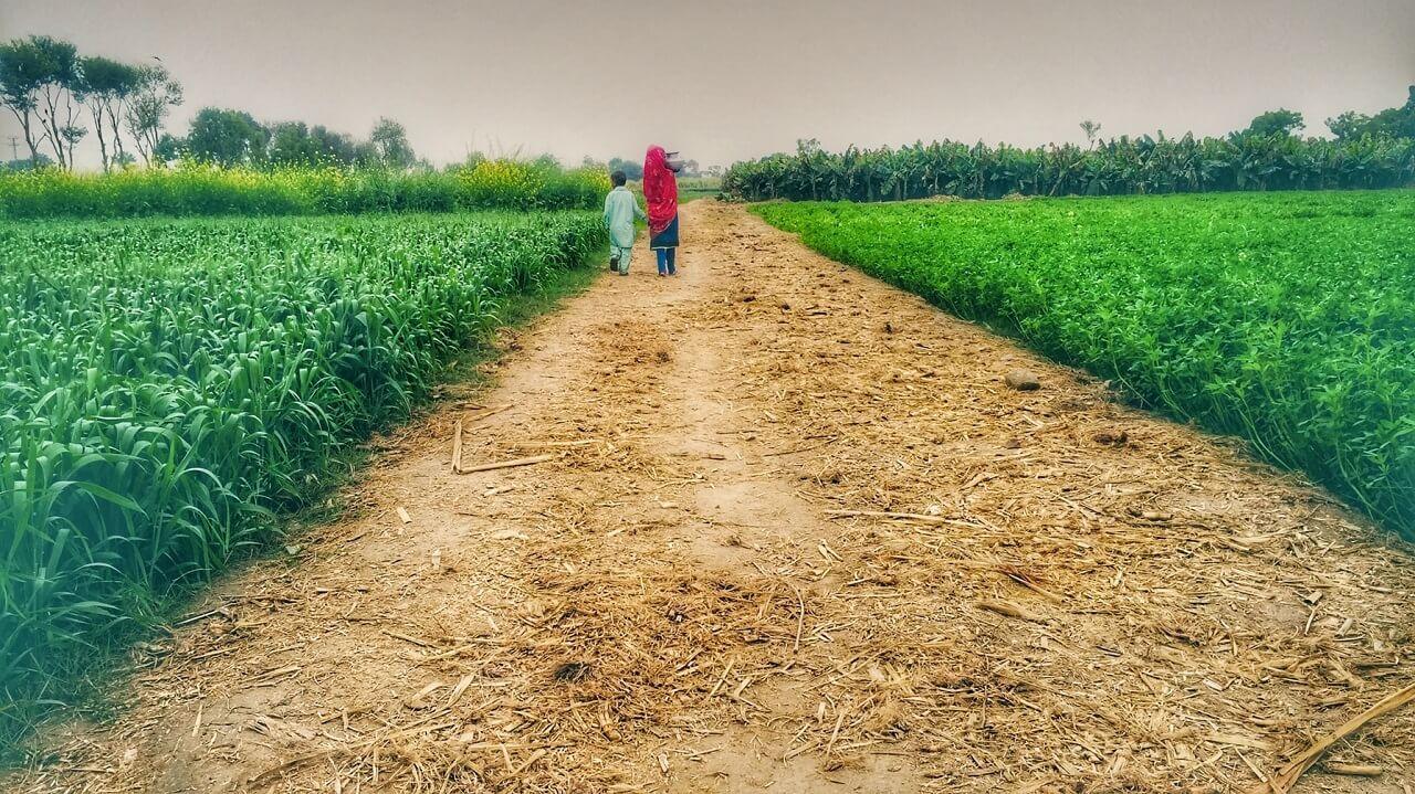 Coltivazioni e piantagioni nel periodo umido. Sindh, Pakistan.