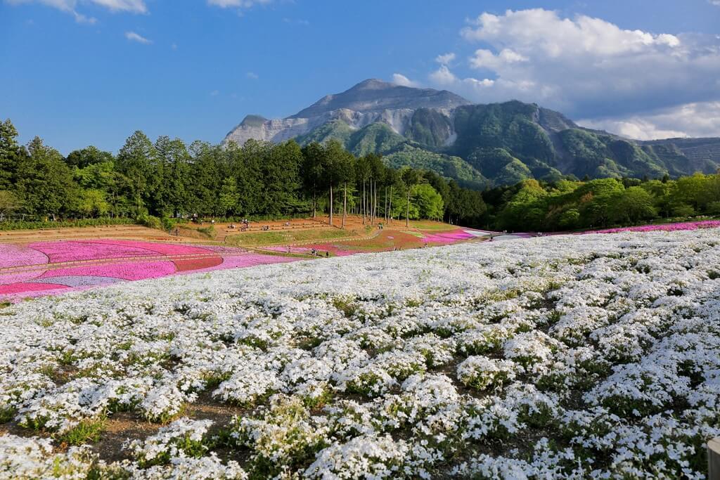 Il monte Buko, visto dal parco Hitsujiyama di Chichibu, prefettura di Saitama