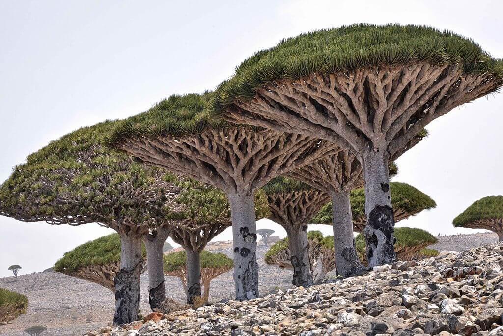 I paesaggi insoliti e alieni dell'isola di Socotra