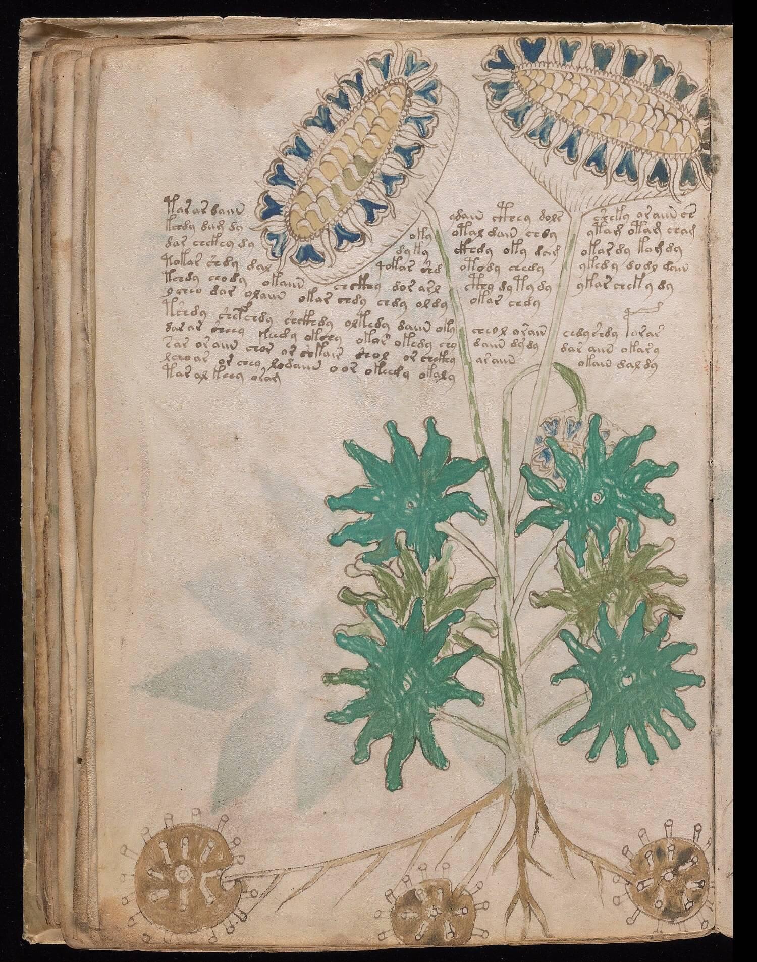 Il foglio 33v del manoscritto Voynich, Yale University Library