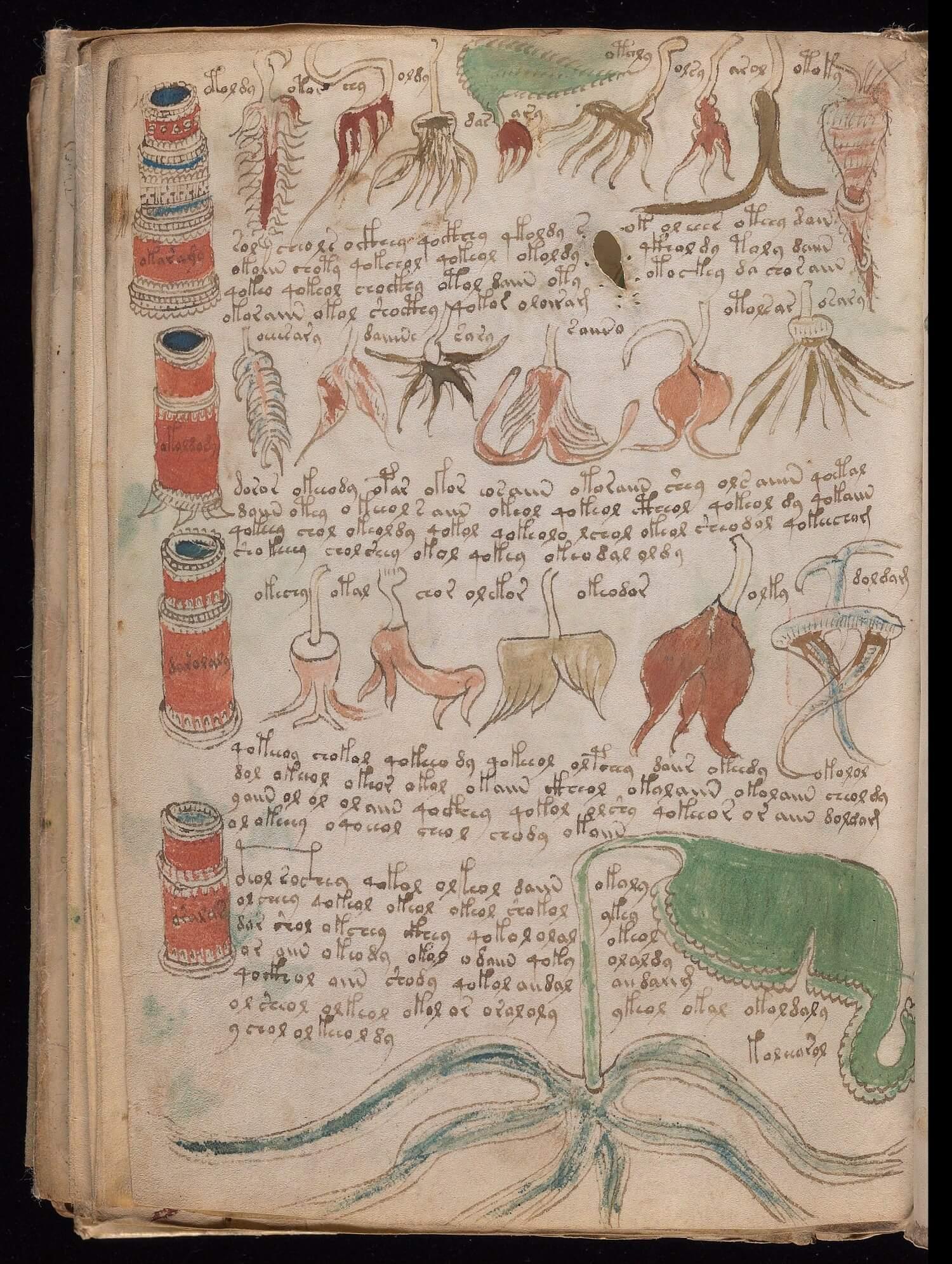 Foglio 99v del manoscritto Voynich, Yale University Library