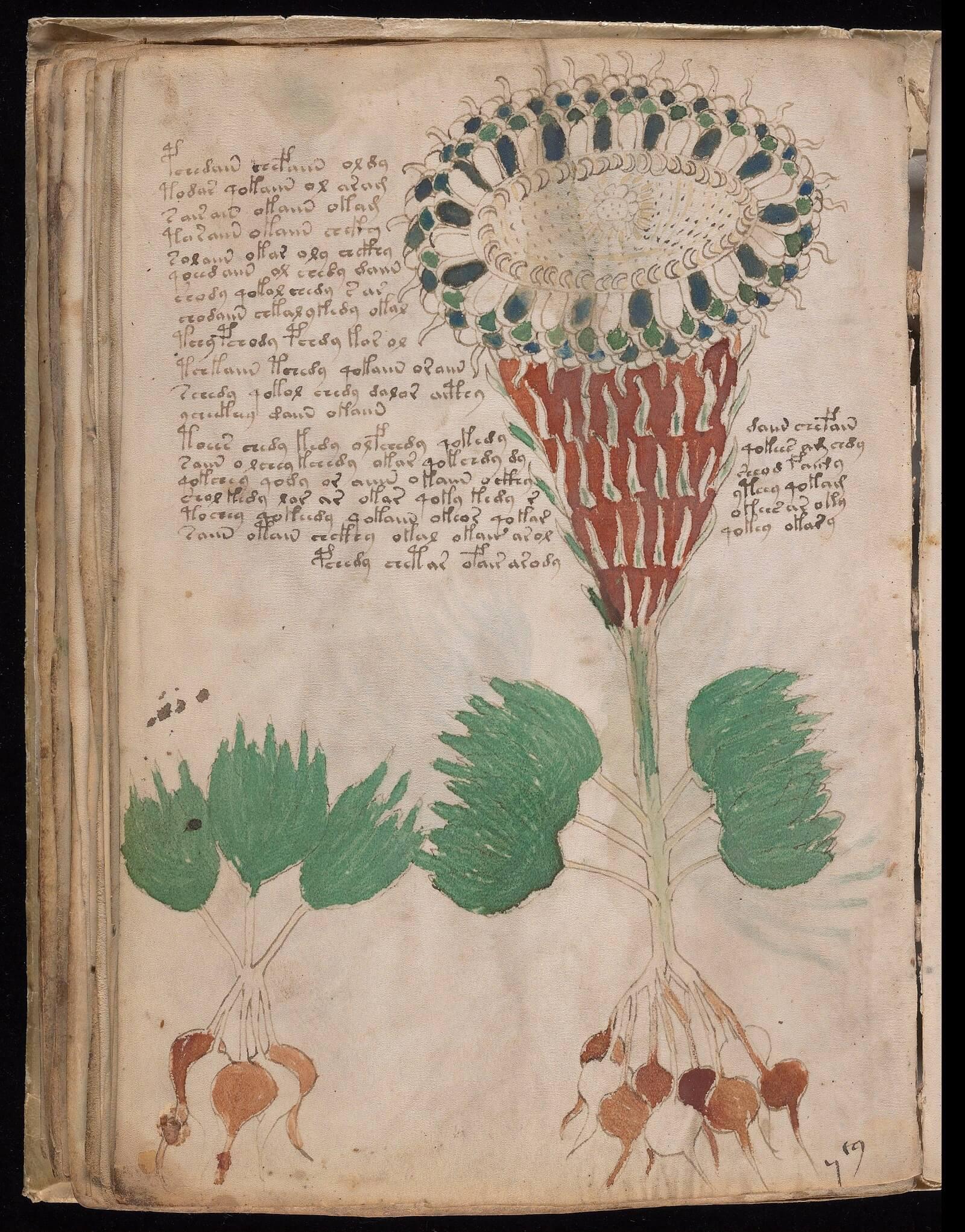 Manoscritto Voynich: foglio 40v, Yale University Library