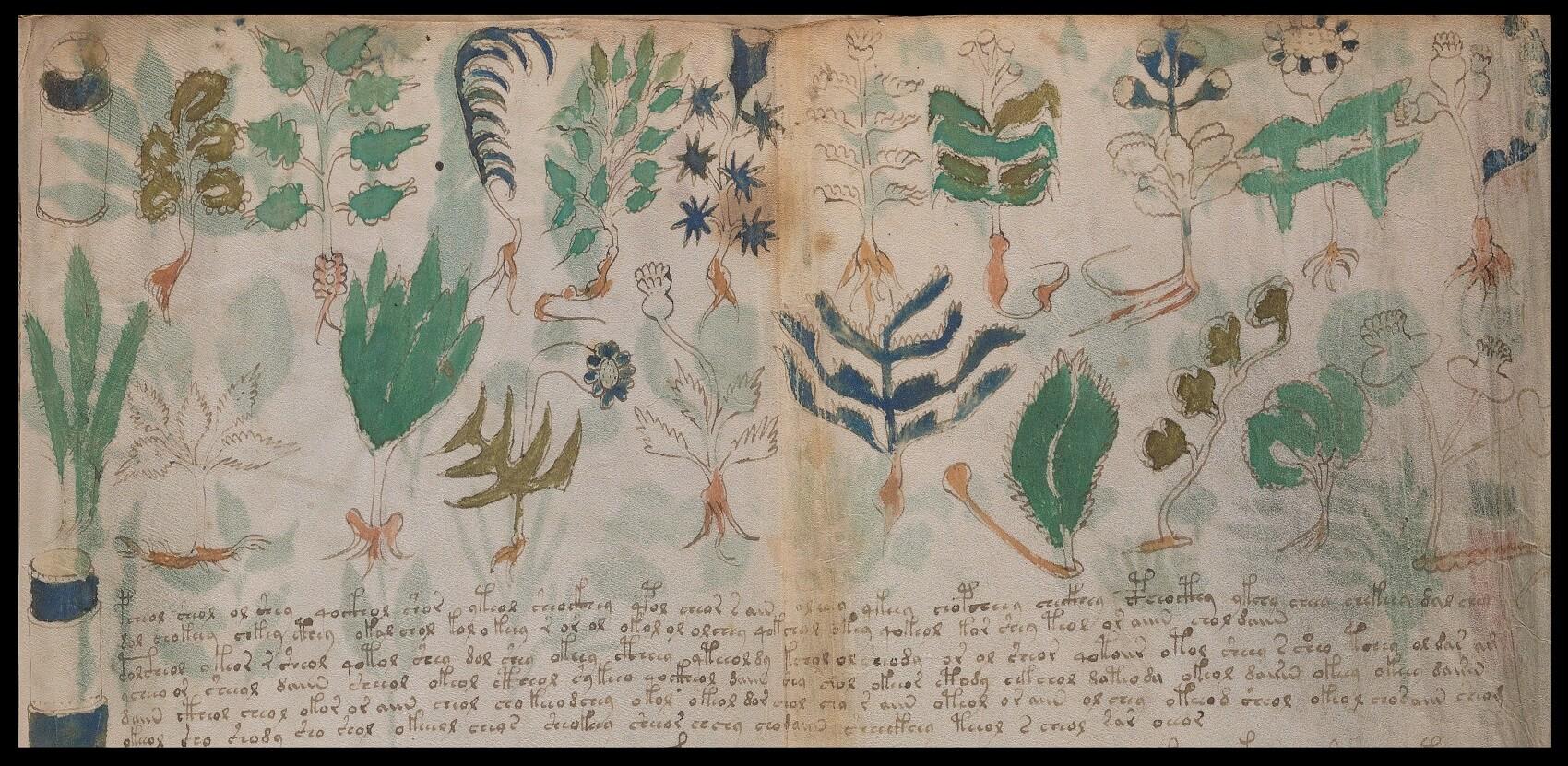Foglio 100v e 101r del manoscritto Voynich, Yale University Library