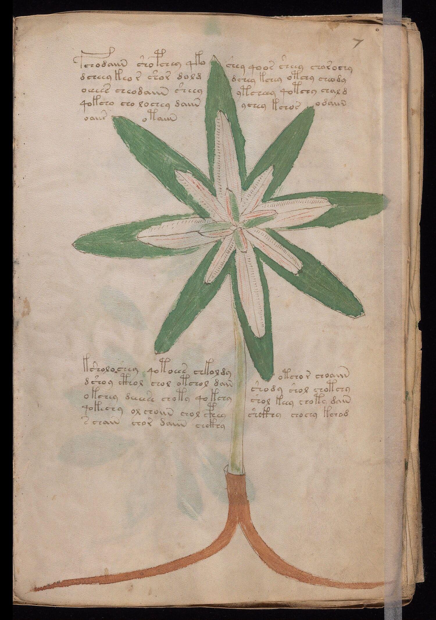 Manoscritto Voynich, il foglio 7r, Yale University Library