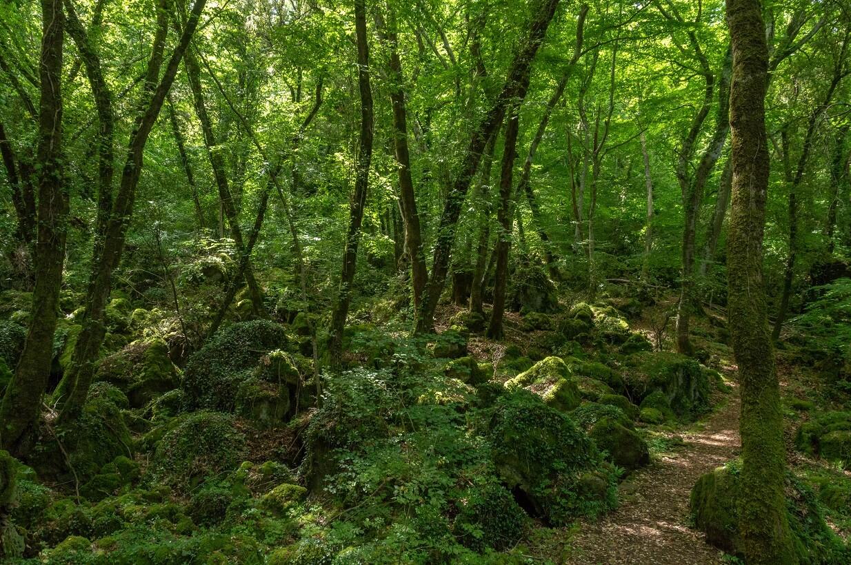 La parte sassosa del bosco del Sasseto (Torre Alfina, Acquapendente)