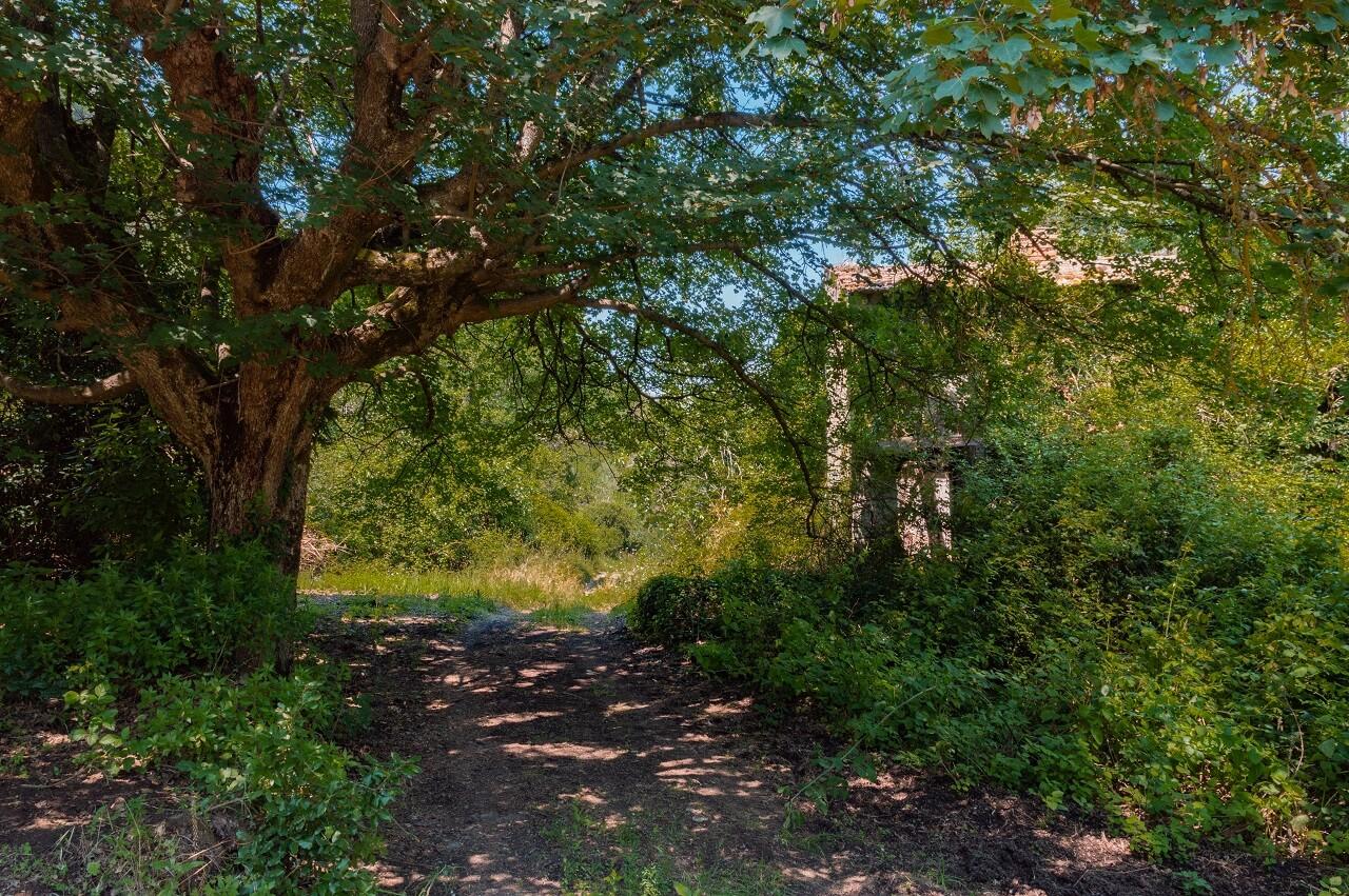 Sentiero lungo la Selva di Malano