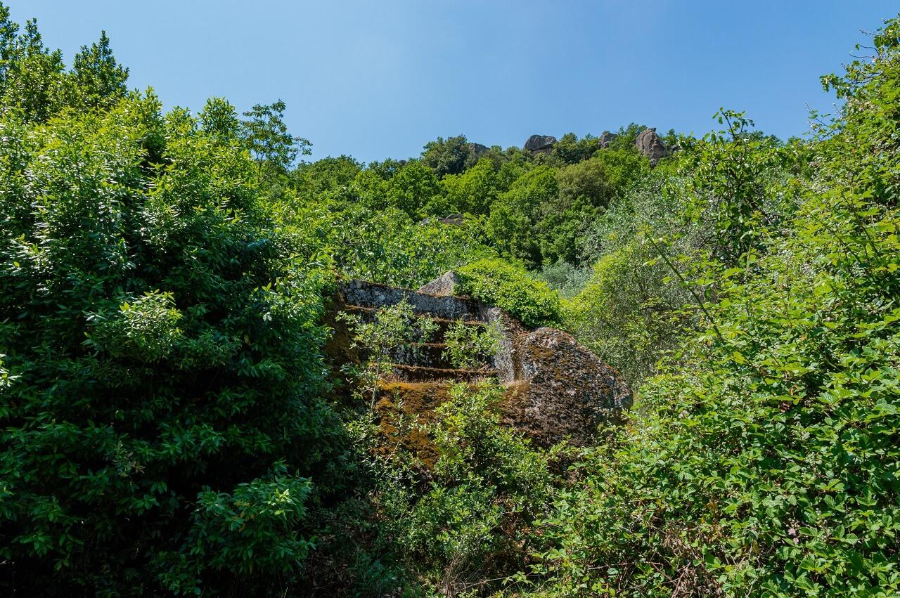 Tomba di Coelius, nella selva di Malano
